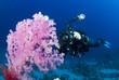 underwater camera man