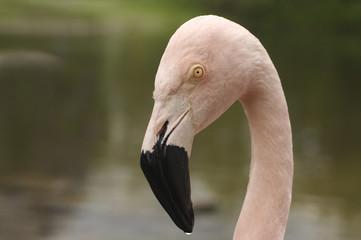 Flamingo im Parc 2