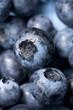 blueberry macro background