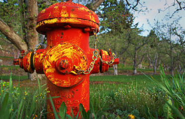 Old Red and Yellow Fire Hydrant in Orchard