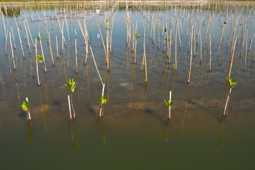 Young trees planting in water