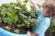 little boy watering his garden
