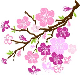 branch of the cherry blossoms