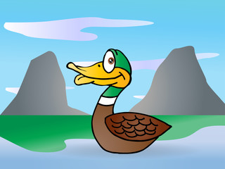 duck swim