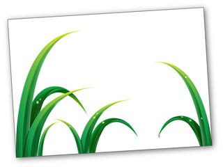 grass card