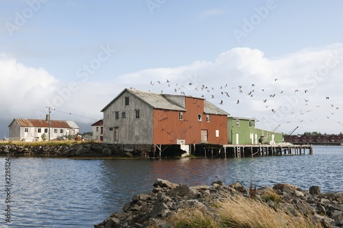 Flock of birds and boathouse on the Lofoten Islands, Norway