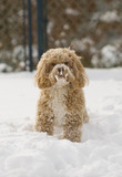 Cute puppy playing in the snow