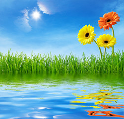 Flowers in the grass, reflecting in the water
