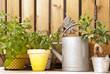 Arrosoir et herbes aromatiques