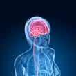 Kopf mit markiertem Gehirn