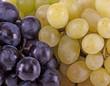 rote und weisse Weintrauben