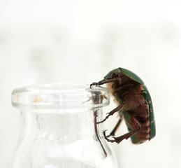 Käfer an Ampulle