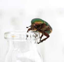 Käfer auf kleiner Flasche