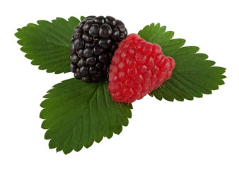 Blackberry and raspberry on leaf with hand made clipping path
