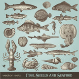 vector set: vintage fish, shell and seafood illustrations