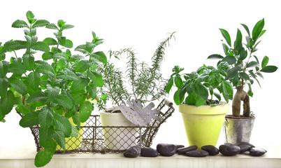 Herbes aromatiques en pots, fond blanc