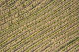 Tuscan Vineyards poster