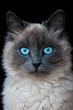 Quadro cat
