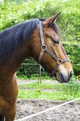 profilo di cavallo