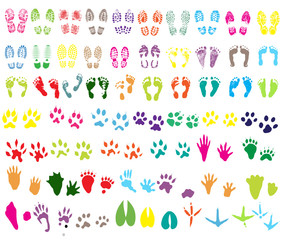 Collection of shoeprint, footprint, animal and bird trails