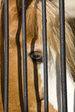 Horse in captivity poster