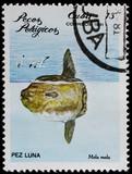 post stamp shows pelagian fish mola mola poster