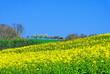 champs dans la campagne en fleurs