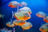 Blue saltwater aquarium poster