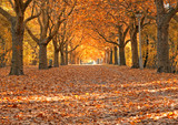 Fototapety Allee im Herbst