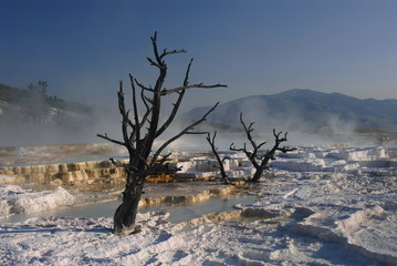 Travertine terraces, Mammoth hot springs,Yellowstone