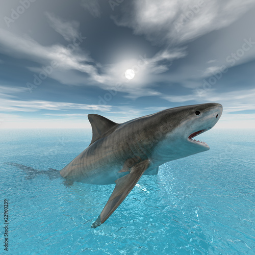 tiger shark swimming