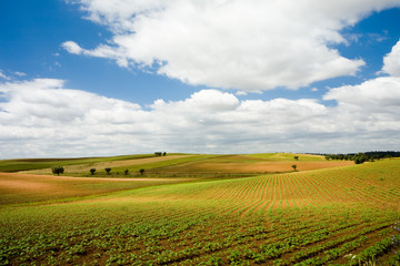 Plains of Alentejo, Portugal