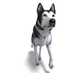 Alaskan Malamute Dog. 3D rendering with clipping path and shadow