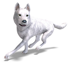 White Wolf. 3D rendering with clipping path and shadow over whit
