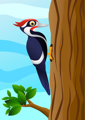Vector woodpecker