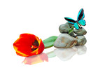 butterfly,stone and red tulip