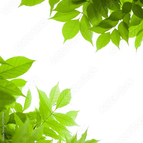fond vert feuilles vertes sur arri re plan blanc nature. Black Bedroom Furniture Sets. Home Design Ideas