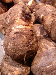 légumes à racines