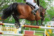 Pferde 120