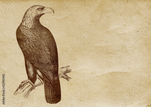 Eagle Illustration (from late 1800)