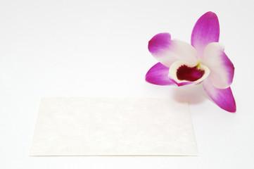 蘭とカード