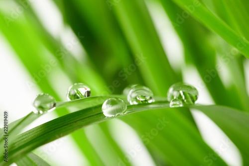 krople-wody-na-zielonej-trawie