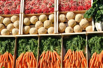 Radis, céleris et carottes