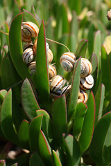 Snails in their environment