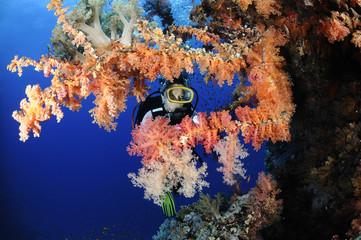 Female diver exploring coral reefs.