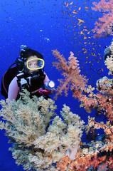 Woman scuba diver and colorful soft corals