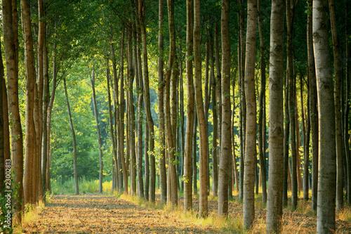 alberi 57