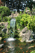 Waterfall and Koi pond in an Asian garden