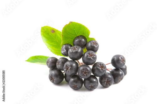 Black Aronia berries