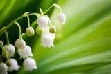 Fototapete Frühling - Tal - Blume